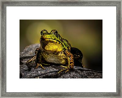 Bullfrog Watching Framed Print by Bob Orsillo