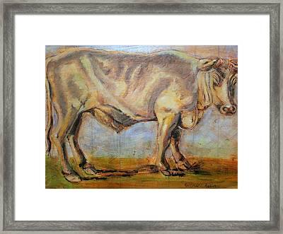 Bullock Framed Print