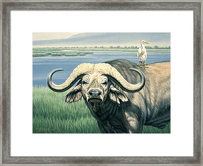 'bullrider'   Framed Print by Paul Krapf