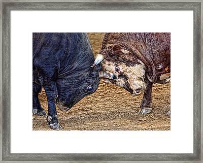 Bulls Framed Print by Karen Walzer