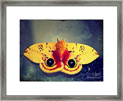 Bullseye Moth Framed Print by Christy Ricafrente