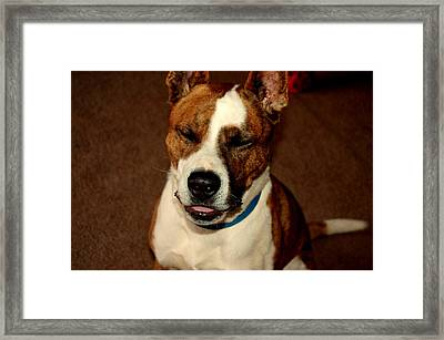 Bully Being Silly Framed Print by Michelle Hunter