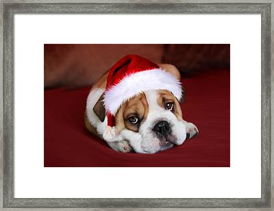 Bully For Santa Framed Print by Julie L Hoddinott