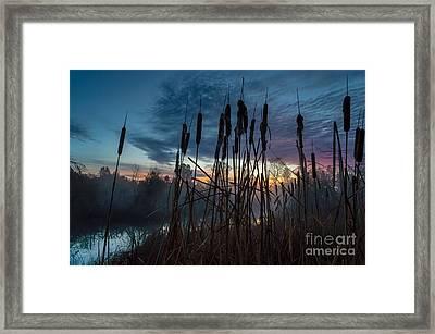 Bulrush Sunrise Framed Print