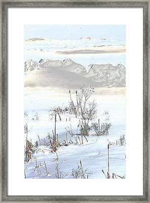 Bulrushes In Snow Framed Print by Carolyn Reinhart