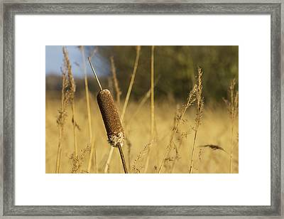 Bulrushes In The Long Grass Framed Print