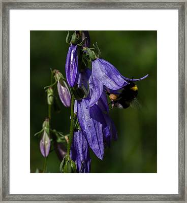 Bumblbee At Work Framed Print