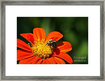 Bumble Bee 009 Framed Print