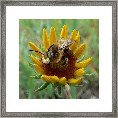 Bumble Bee Beauty Framed Print by Barbara St Jean
