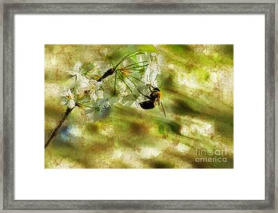 Bumble Bee Eating Sweet Nectar Framed Print by Dan Friend