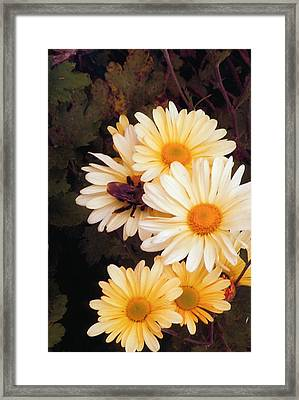 Bumble Bee Heaven Framed Print by Barb Baker