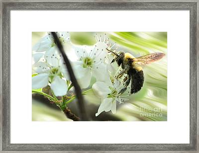 Bumble Bee On Flower Framed Print by Dan Friend