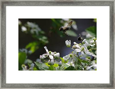Bumble Bees In Flilght Framed Print