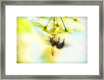 Bumble Going In For The Nectar Framed Print by Dan Friend