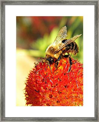 Bumblebee And Seed Globe Framed Print by Chris Berry