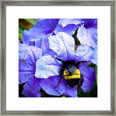 Bumblebee Brunch Framed Print by Dee Dee  Whittle
