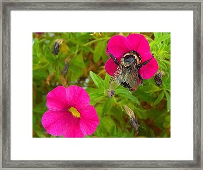 Bumblebee Hug Framed Print