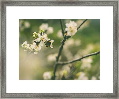 Bumblebee Framed Print by Marco Oliveira