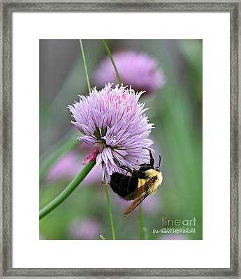 Framed Print featuring the photograph Bumblebee On Clover by Barbara McMahon