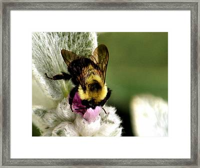 Framed Print featuring the photograph Bumbler by Cathy Donohoue