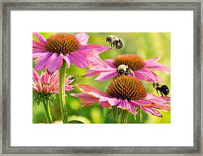 Bumbling Bees Framed Print by Bill Pevlor