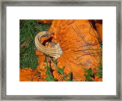 Framed Print featuring the photograph Bumpy And Beautiful by Caryl J Bohn