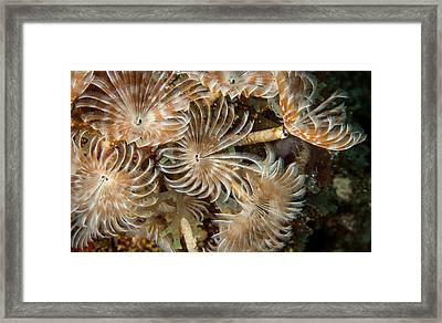 Bunch Of Dusters Framed Print by Jean Noren