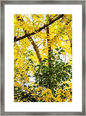 Bunch Of Green Framed Print