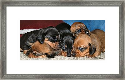 Bunch Of Puppies Framed Print by Anthony Kougl