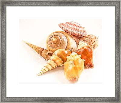 Bunch Of Shells Framed Print by Jean Noren
