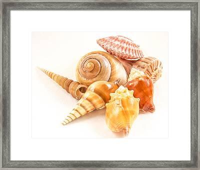 Bunch Of Shells Framed Print by Jean Noren