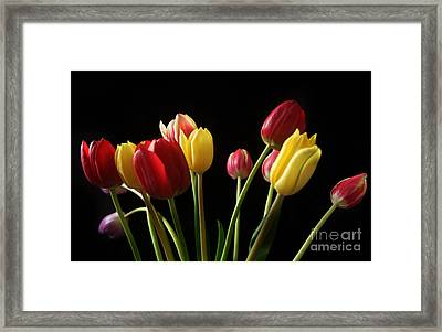 Bunch Of Tulips Framed Print by Eden Baed