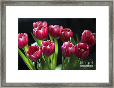 Bunch Of Tulips Framed Print by Sharon Talson