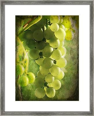 Bunch Of Yellow Grapes Framed Print by Barbara Orenya