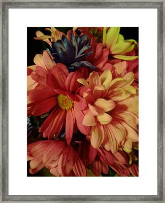 Bunched Daisies Framed Print