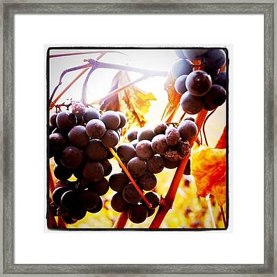 Bunches 3   Framed Print