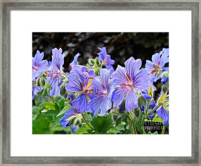 Framed Print featuring the photograph Bunches by Clare Bevan