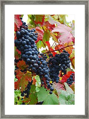 Bunches Of Grapes Framed Print by Jani Freimann