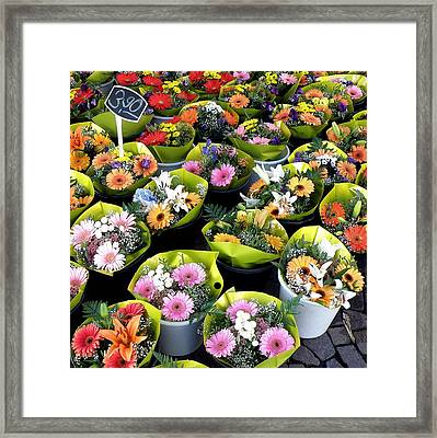 Bundles Of Joy Framed Print