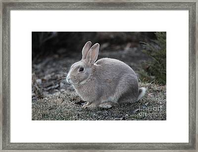 Framed Print featuring the photograph Bunny by Ann E Robson