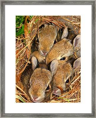 Bunny Babies Framed Print