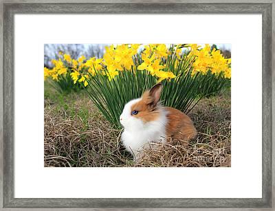 Bunny Bouquet Framed Print by Leslie Kirk