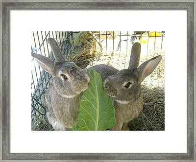 Bunny Friends Framed Print