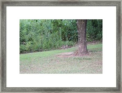Framed Print featuring the photograph Bunny Hop by Lorna Rogers Photography