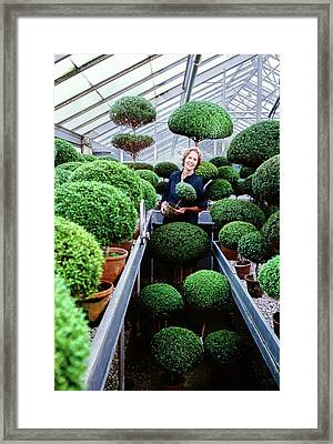 Bunny Mellon In Her Greenhouse Framed Print