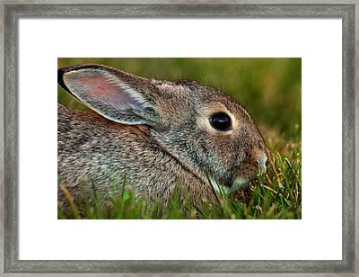 Bunny Profile Framed Print by Mike Flynn