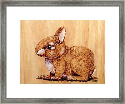 Bunny Framed Print by Ron Haist
