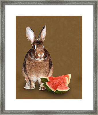 Bunny Snack Framed Print by Diane Bell
