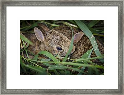 Bunny Twins Framed Print by Bradley Clay