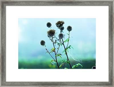 Burdock Plant Framed Print